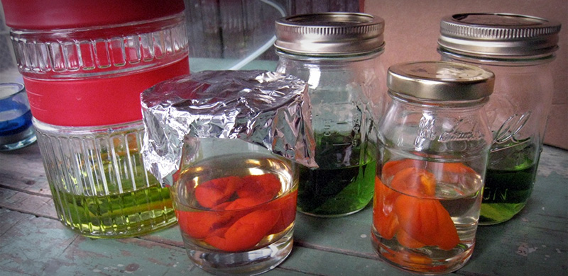 Image of Cocktail Infusions Waiting to be Ready